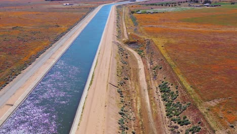 Aerial-of-the-California-aqueduct-surrounded-by-fields-of-wildflowers-and-poppy-flowers-Mojave-Desert-5