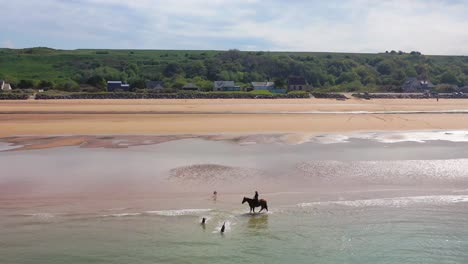 Aerial-over-dogs-running-and-horse-and-rider-on-Omaha-Beach-Normandy-France-site-of-World-War-two-D-Day-allied-invasion-3