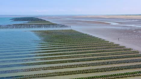 Aerial-over-French-mussel-farm-at-Utah-Beach-Normandy-France-1