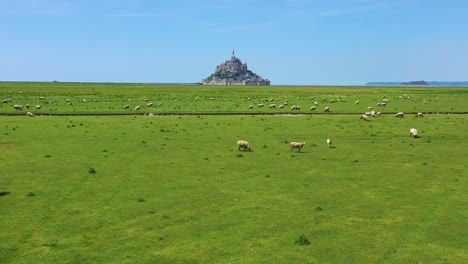 Beautiful-daytime-aerial-over-fields-of-sheep-and-farm-grass-with-Mont-Saint-Michel-monastery-in-Normandy-France-background