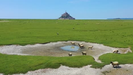 Beautiful-daytime-aerial-over-fields-of-sheep-and-farm-grass-with-Mont-Saint-Michel-monastery-in-Normandy-France-background-3