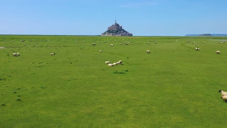 Beautiful-daytime-aerial-over-fields-of-sheep-and-farm-grass-with-Mont-Saint-Michel-monastery-in-Normandie-France-background