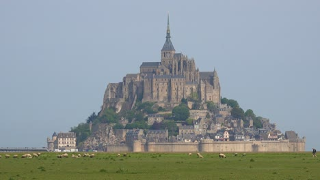 Fields-of-sheep-and-livestock-grazing-with-Mont-Saint-Michel-monastery-in-Normandy-France-background