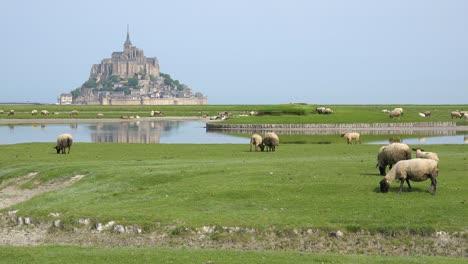 Felder-Von-Schafen-Und-Farmgras-Mit-Kloster-Mont-Saint-Michel-In-Normandie-Frankreich-Hintergrund-1