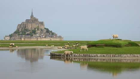 Fields-of-sheep-and-farm-grass-with-Mont-Saint-Michel-monastery-in-Normandie-France-background-2
