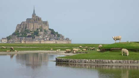 Fields-of-sheep-and-farm-grass-with-Mont-Saint-Michel-monastery-in-Normandie-France-background-3