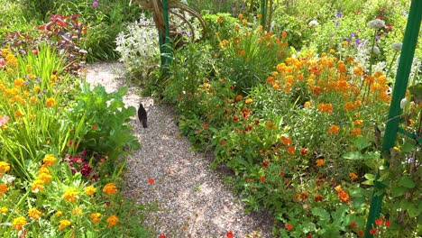 Flowers-grow-in-the-garden-of-Claude-Monet-in-Giverny-France-2