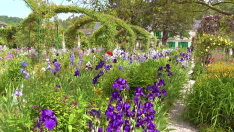 Flowers-grow-in-the-garden-of-Claude-Monet-in-Giverny-France-3
