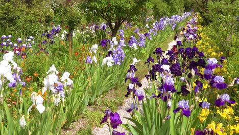 Flowers-grow-in-the-garden-of-Claude-Monet-in-Giverny-France-4