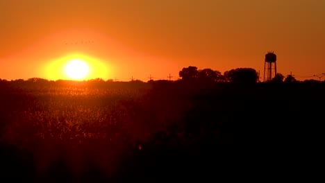 Sunset-over-cotton-fields-in-small-Mississippi-southern-town-with-migrating-birds-flying-and-water-tower