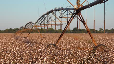 Nice-view-of-farm-water-irrigation-system-in-agricultural-cotton-growing-in-a-field-in-the-Mississippi-Río-Delta-region