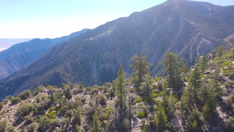 Aerial-over-pinyon-pine-trees-along-a-ridge-in-the-Eastern-Sierra-mountains-near-Lone-PIne-and-the-Owens-Valley-california