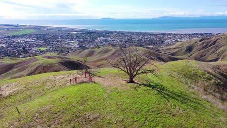 2020---Vista-Aérea-Sobre-Las-Verdes-Colinas-Y-Montañas-De-La-Costa-Del-Pacífico-Detrás-De-Ventura-California-Incluidos-Dos-árboles-Emblemáticos-6