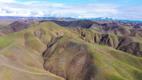 2020---Vista-Aérea-Sobre-Las-Verdes-Colinas-Y-Montañas-De-La-Costa-Del-Pacífico-Detrás-De-Ventura-California-Incluidos-Dos-árboles-Emblemáticos-7