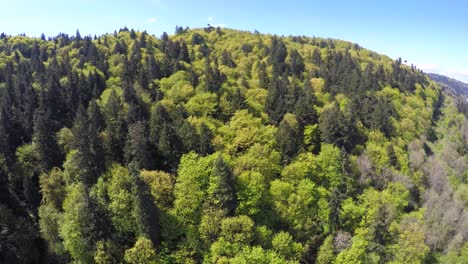 An-aerial-image-over-a-green-and-lush-forest-in-the-Pacific-Northwest
