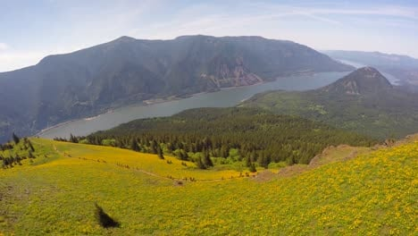 A-beautiful-aerial-view-along-a-flower-covered-hillside-in-the-Pacific-Northwest-with-the-Columbia-River-distant-1