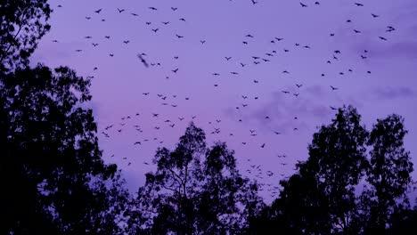 Miles-De-Murciélagos-Se-Elevan-Al-Cielo-En-Vuelo-Al-Anochecer-En-El-Parque-Nacional-Carnarvan-Queensland-Australia-1