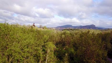 Antenne-Von-Tausenden-Von-Flughunden-Die-In-Einem-Wald-Im-Carnarvon-Nationalpark-Fliegen