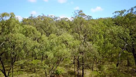 Steigende-Antenne-über-Carvarvon-Nationalpark-Mit-Wäldern-Bäume-Bergketten-Victoria-Australien-