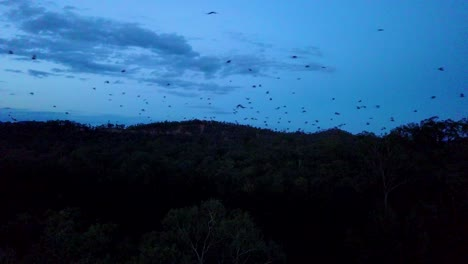 Tausende-Von-Fledermäusen-Fliegen-In-Der-Abenddämmerung-Im-Carnarvan-National-Park-Queensland-Australien-2