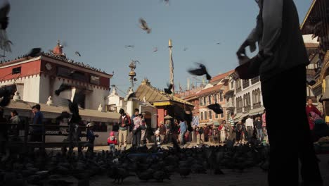 Thousands-of-pigeons-crowd-around-the-grounds-of-a-Buddhist-Temple-in-Nepal-2