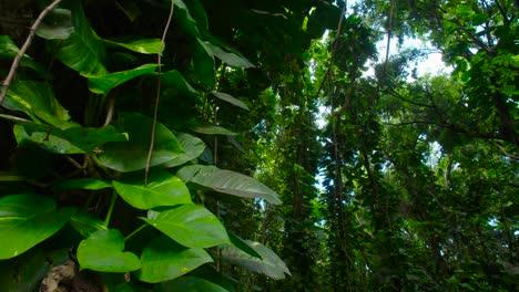 Panning-shot-across-a-deep-jungle-or-rainforest