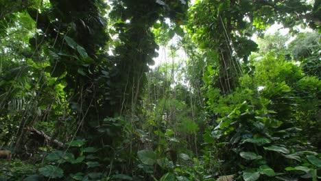 Panning-shot-across-a-deep-jungle-or-rainforest-canopy-1