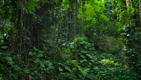 Panning-shot-across-a-deep-jungle-or-rainforest-canopy-2