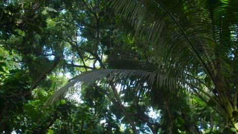 Panning-shot-across-a-deep-jungle-or-rainforest-canopy-3