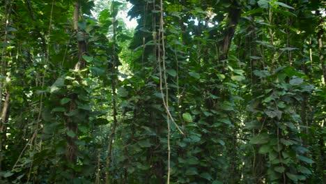 Panning-shot-across-a-deep-jungle-or-rainforest-canopy-4