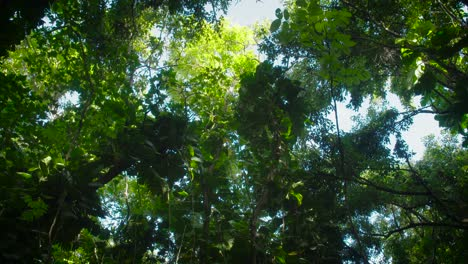 Low-angle-shot-under-a-deep-jungle-or-rainforest-canopy