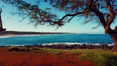 Nice-aerial-shot-through-trees-to-reveal-the-Molokai-Hawaii-coastline