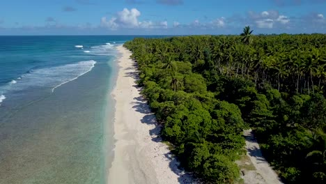 Endless-palm-or-coconut-tree-groves-and-beautiful-beaches-on-the-island-paradise-of-Teraina-Island-Kiribati-Micronesia-Pacific-Islands