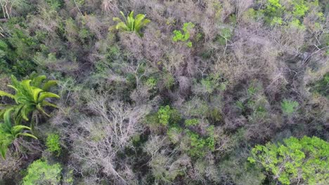 Aerial-over-jungle-landscapes-of-Guatemala-1