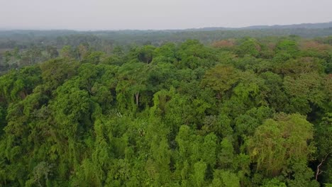 Vista-Aérea-over-generic-jungle-and-rainforest-in-Guatemala