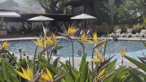 Plano-Genérico-De-Establecimiento-De-Un-Hotel-De-Lujo-Con-Piscina-Y-Ave-Del-Paraíso-En-Primer-Plano
