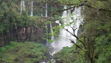 Soft-focus-trees-and-tropical-waterfalls