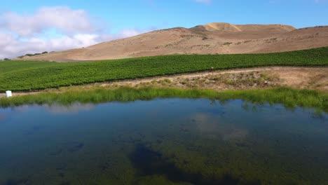 Hermosa-Antena-De-Viñedos-Montañosos-En-La-Región-Vitivinícola-De-La-Denominación-De-California-Santa-Rita