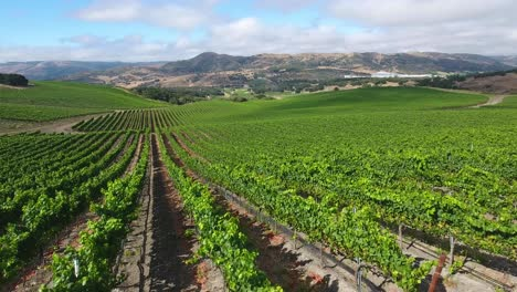 Beautiful-aerial-of-hilly-vineyards-in-the-grape-growing-region-of-Californias-santa-rita-appellation-3