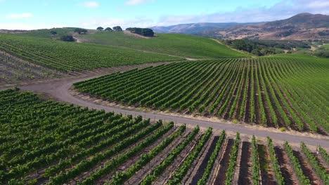 Beautiful-aerial-of-hilly-vineyards-in-the-grape-growing-region-of-Californias-santa-rita-appellation-4