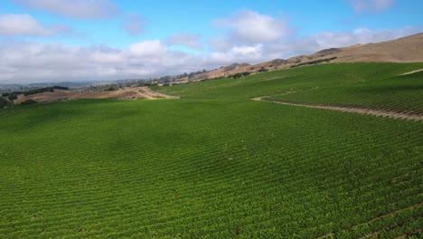 Hermosa-Antena-De-Viñedos-Montañosos-En-La-Región-Vitivinícola-De-La-Denominación-6-De-Californias-Santa-Rita