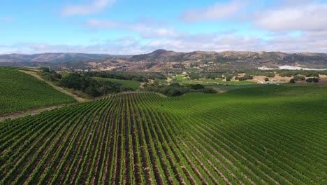 Beautiful-aerial-of-hilly-vineyards-in-the-grape-growing-region-of-Californias-santa-rita-appellation-7