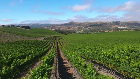 Beautiful-aerial-of-hilly-vineyards-in-the-grape-growing-region-of-Californias-santa-rita-appellation-8