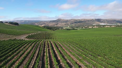 Beautiful-aerial-of-hilly-vineyards-in-the-grape-growing-region-of-Californias-santa-rita-appellation-9