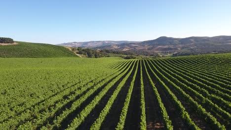 Beautiful-aerial-of-hilly-vineyards-in-the-grape-growing-region-of-Californias-santa-rita-appellation-15