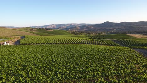 Beautiful-aerial-of-hilly-vineyards-in-the-grape-growing-region-of-Californias-santa-rita-appellation-16
