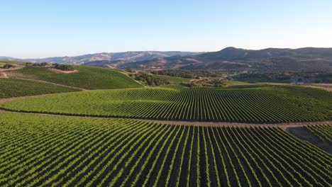 Beautiful-aerial-of-hilly-vineyards-in-the-grape-growing-region-of-Californias-santa-rita-appellation-17