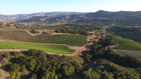 Hermosa-Antena-De-Viñedos-Montañosos-En-La-Región-Vitivinícola-De-La-Denominación-De-California-Santa-Rita-18