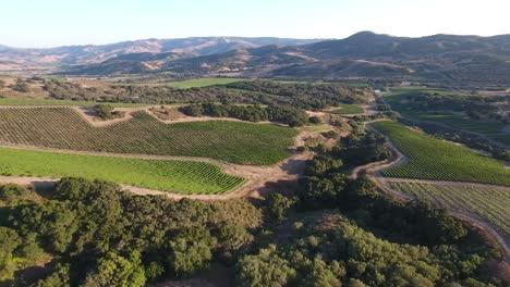 Hermosa-Antena-De-Viñedos-Montañosos-En-La-Región-Vitivinícola-De-La-Denominación-De-California-Santa-Rita-19