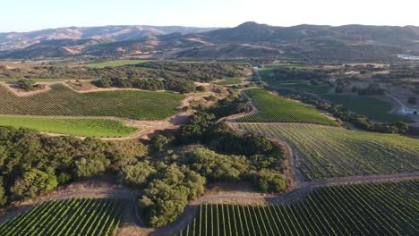 Beautiful-aerial-of-hilly-vineyards-in-the-grape-growing-region-of-Californias-santa-rita-appellation-20